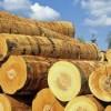 木材进出口业务代理报关及清关国际及物流
